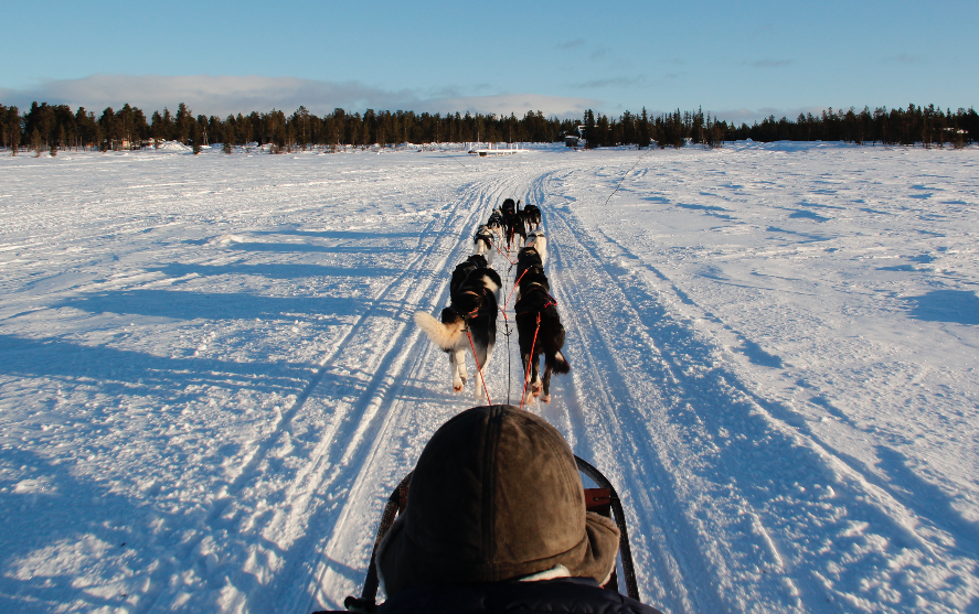 Ridding with the huskies in Winter Wonderland
