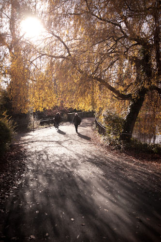 Beautiful light in Hampstead Heath by Lulu Mazzocco